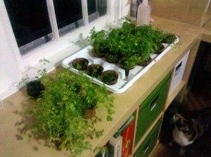 my-herbs-2010-05-21-23-44-50